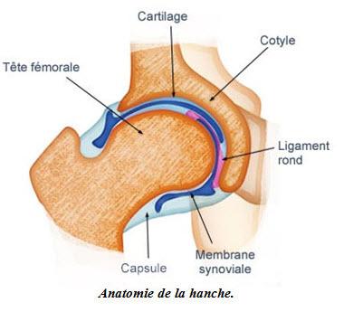Les femmes et la hanche - Source de l'image:http://www.futura-sciences.com